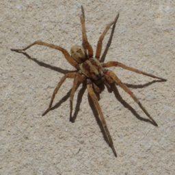Уничтожение пауков в Мурманске